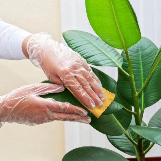 5 Tips για να κρατήσεις τα φυτά σου υγιή το χειμώνα!