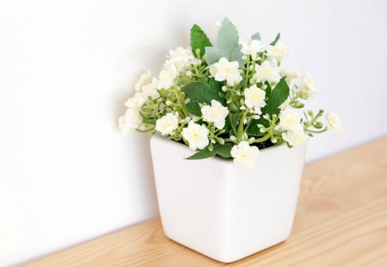 γιασεμί άσπρα λουλούδια φυτά κοιμάσαι καλύτερα