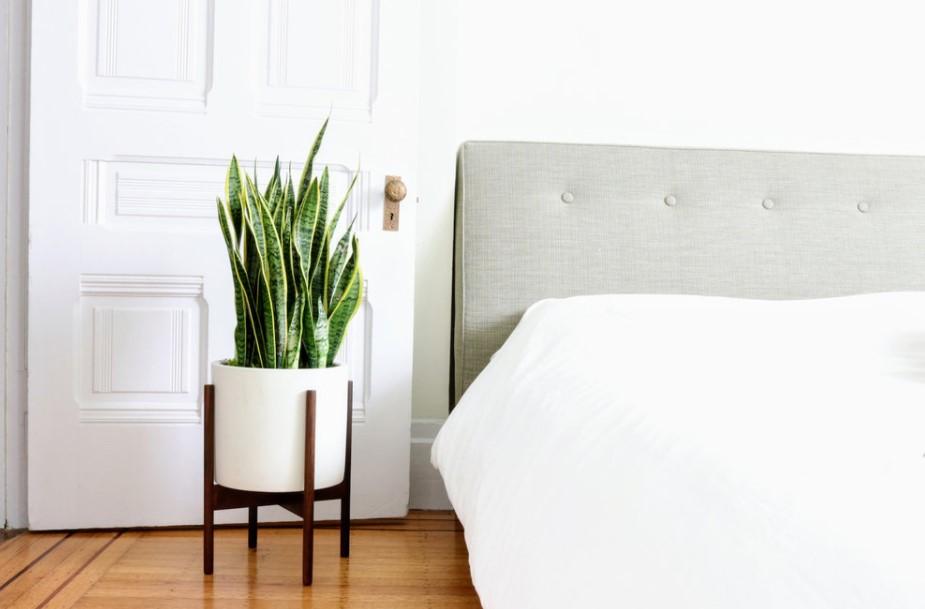 γλώσσα πεθεράς κρεβάτι υπνοδωμάτιο