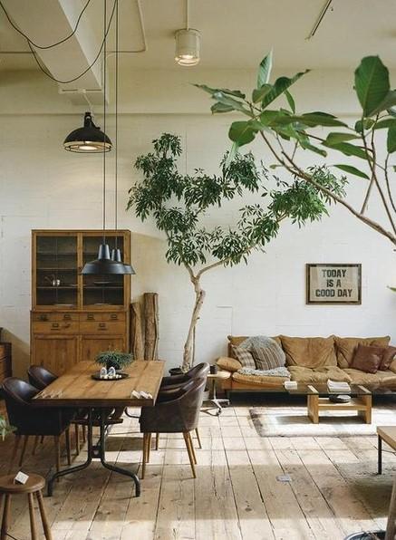 σαλόνι τραπεζαρία φυτά