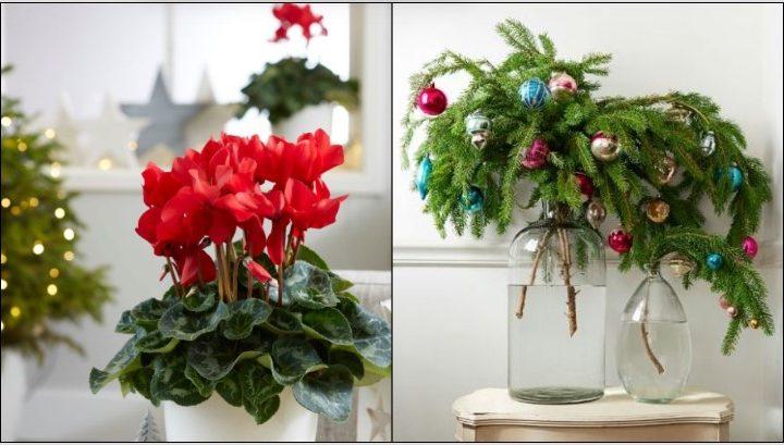 5 Χριστουγεννιάτικα φυτά ιδανικά για διακόσμηση τις γιορτές!