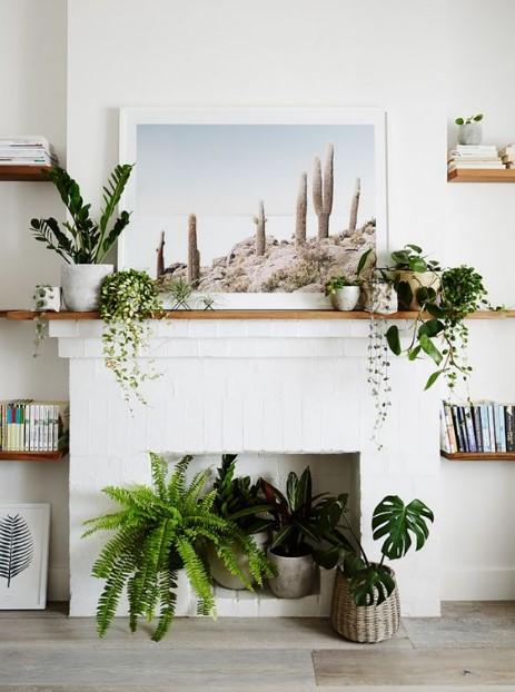 διακοσμητικά φυτά στο τζάκι