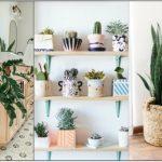 φυτά εσωτερικούς χώρους αρχάριους
