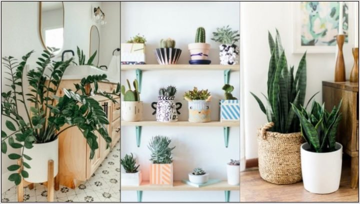 Τα 6 καλύτερα φυτά εσωτερικού χώρου για αρχάριους!