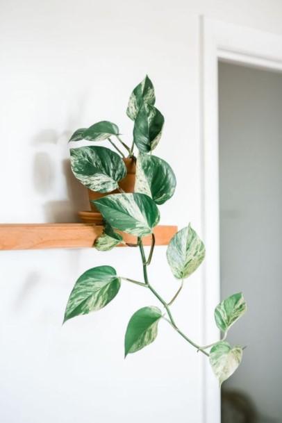 γλαστράκι πόθο ράφι φυτά εσωτερικούς χώρους αρχάριους