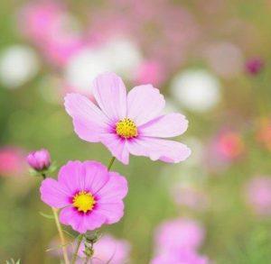 λουλούδι για κήπο κόσμος