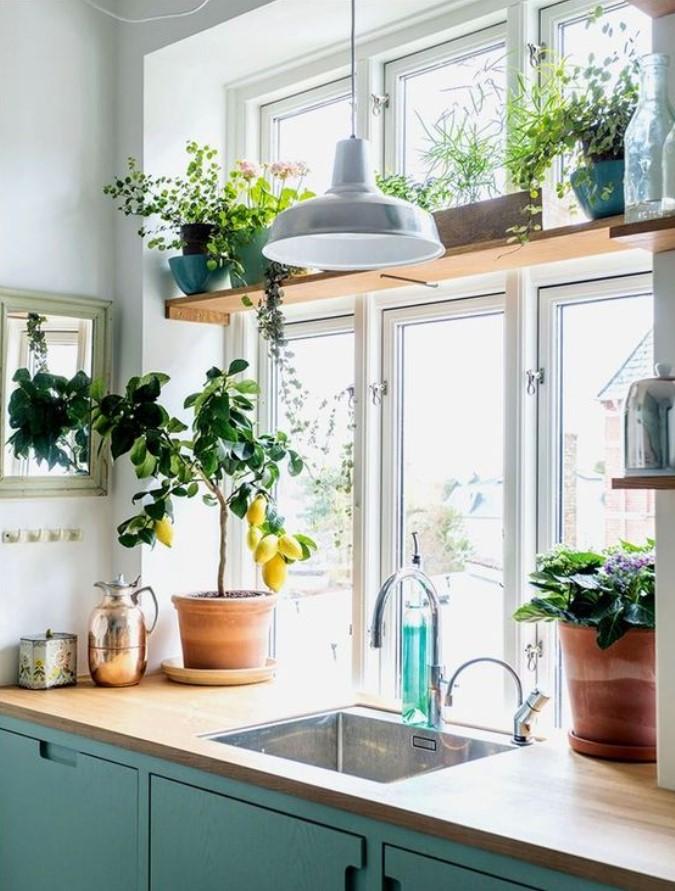 φυτά κουζίνας