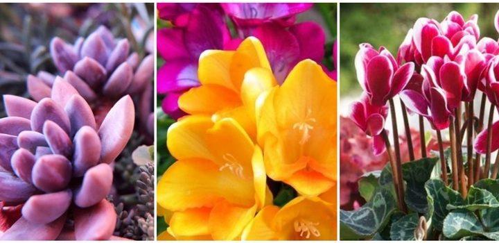 7 Φυτά και λουλούδια σε γλάστρα που αντέχουν στο κρύο!
