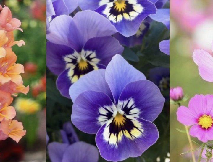 12 Είδη λουλουδιών για να φτιάξεις έναν υπέροχο κήπο!