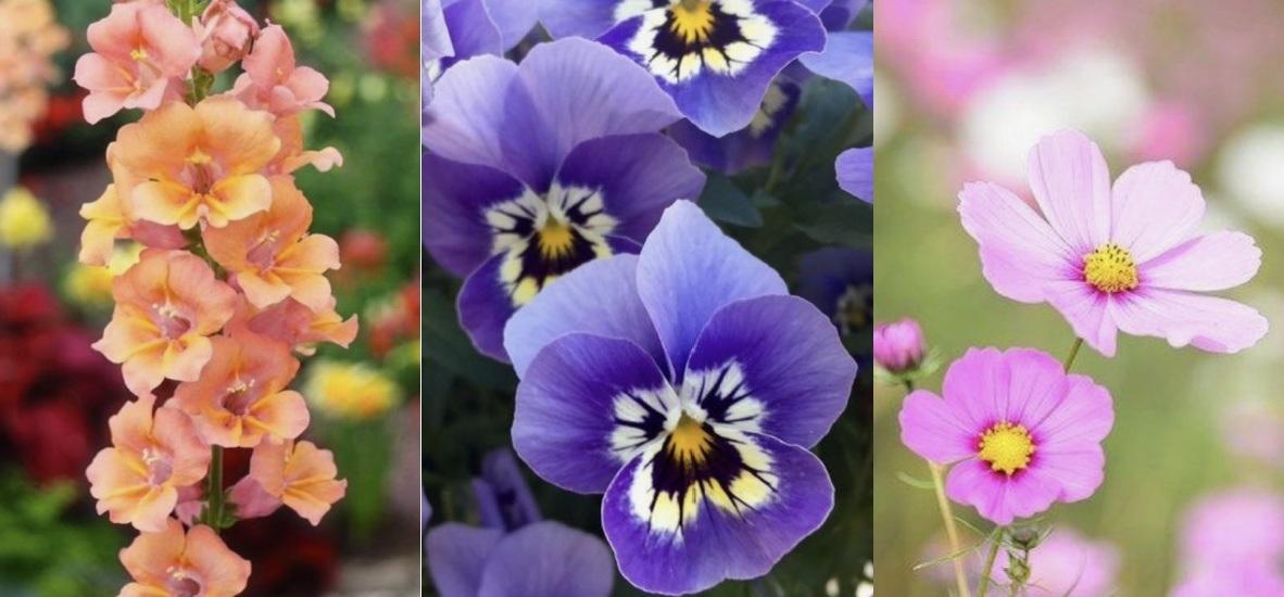 όμορφα λουλούδια για τον κήπο ανοιξιάτικα