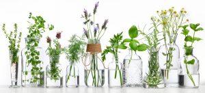 αρωματικα φυτα σε νερο