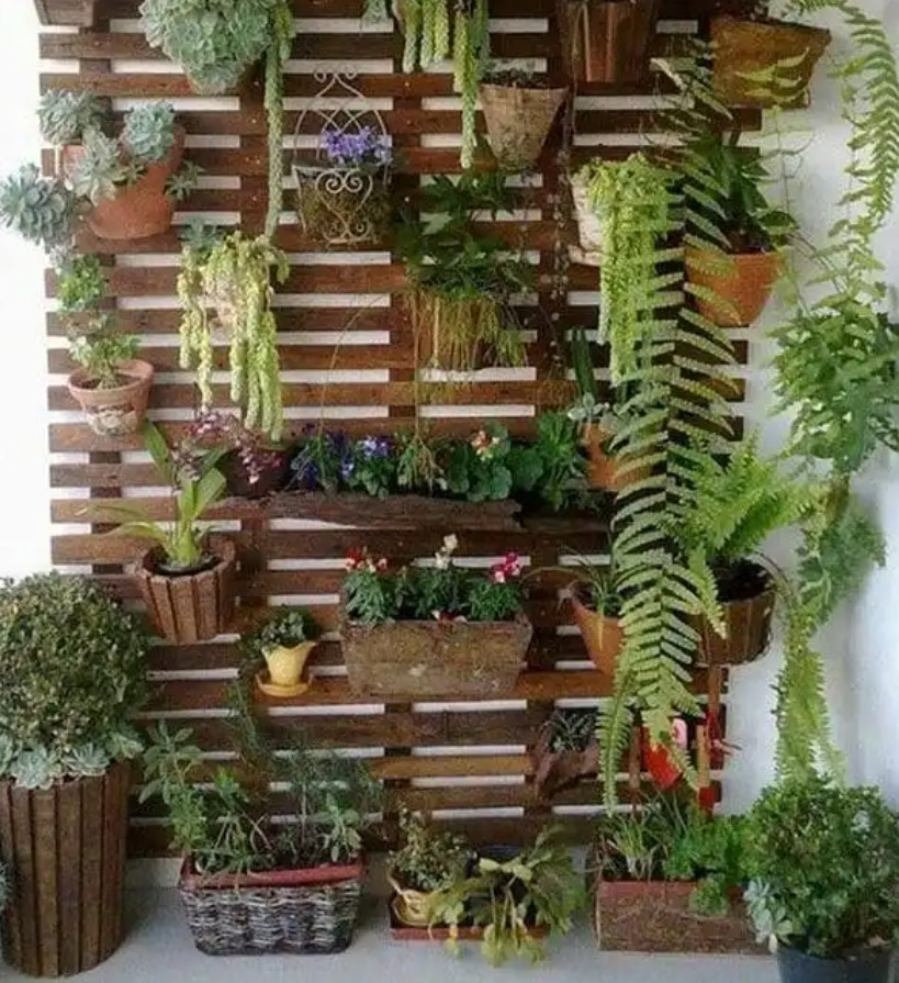 κήπος τοίχου με ανάμεικτα φυτά μικρό μπαλκόνι