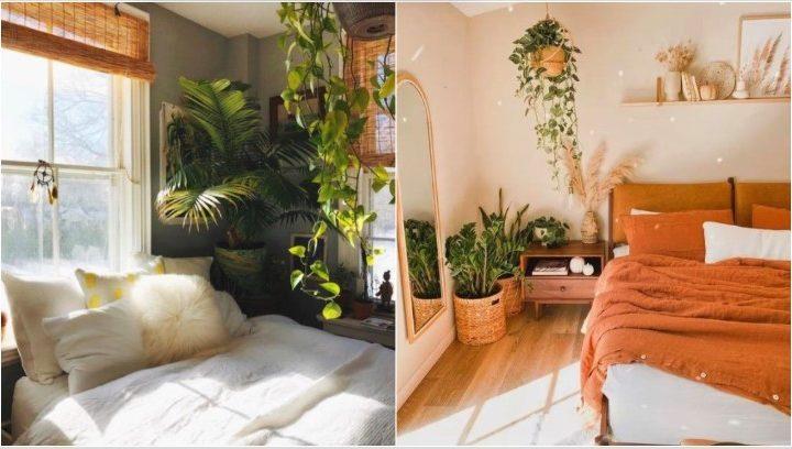 6 Φυτά που θα ομορφύνουν την κρεβατοκάμαρα σου!