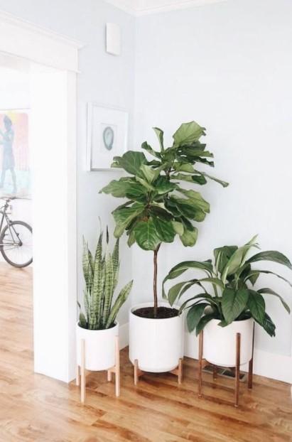 γλάστρες φυτά γωνία