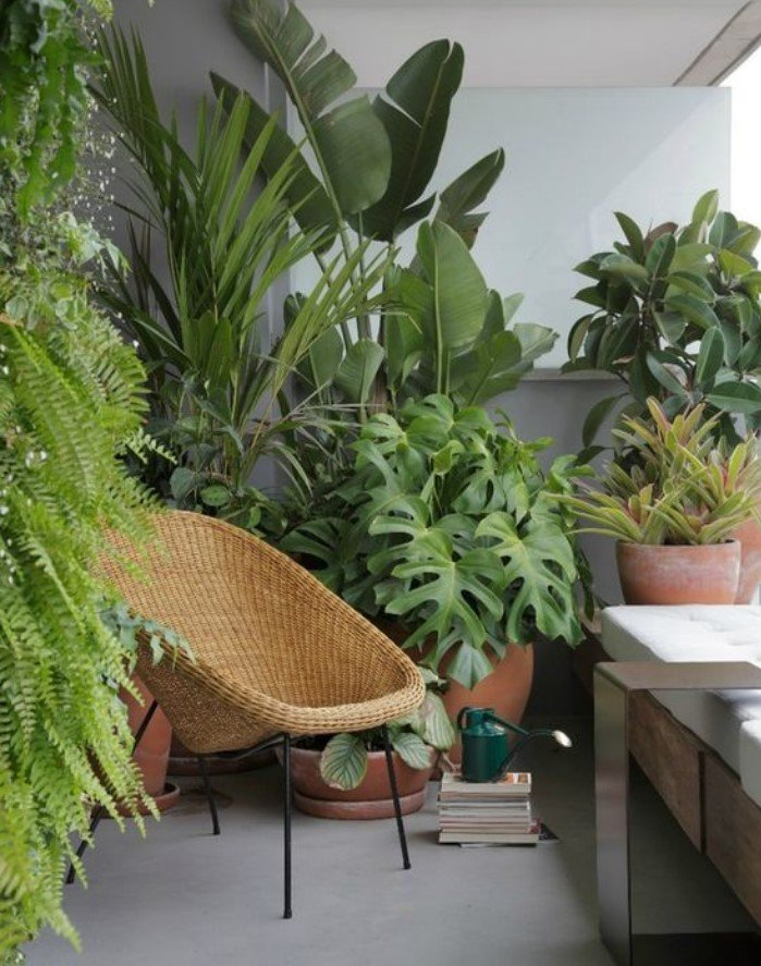 μπαλκόνι με πολλά φυτά