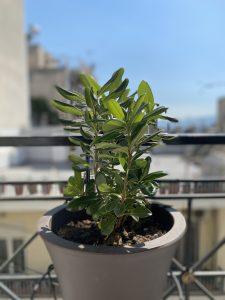 αγγελική 10 Όμορφα φυτά για αρχάριους!