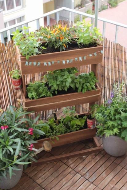 ανθοστήλη φυτά μπαλκόνι