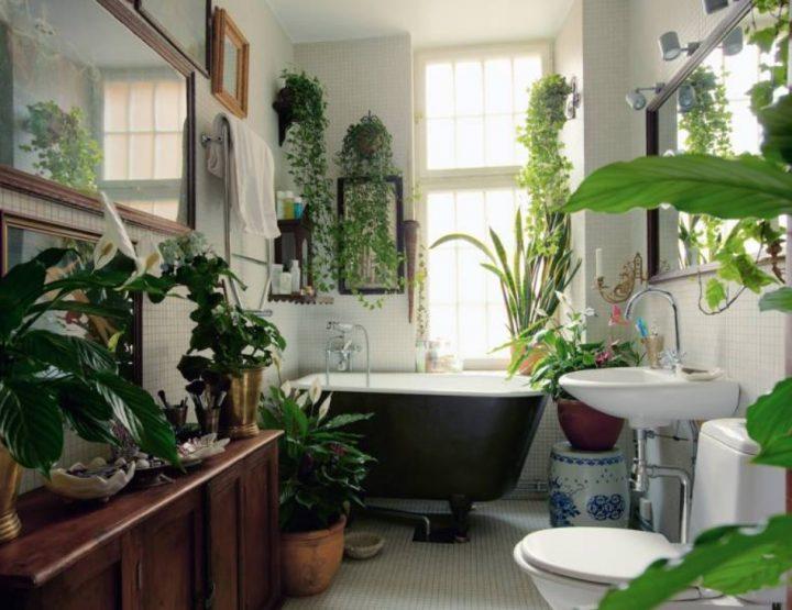 6 Εντυπωσιακά φυτά για το μπάνιο σου!