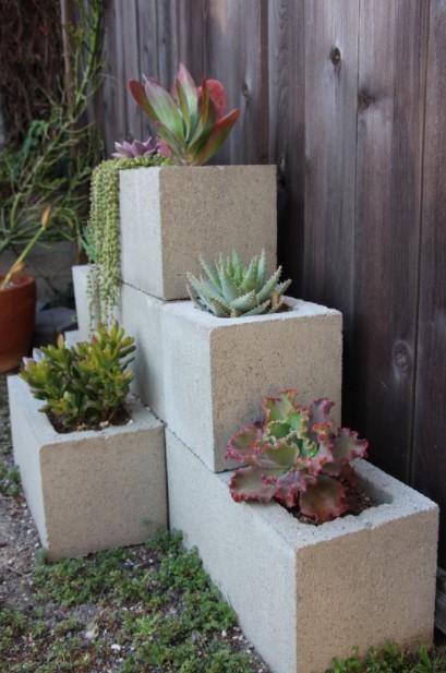 τσιμεντόλιθοι φυτά
