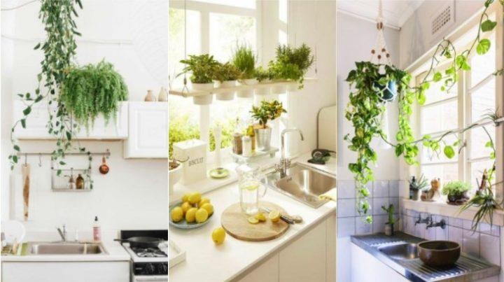 5 Φυτά που θα ομορφύνουν την κουζίνα σου!