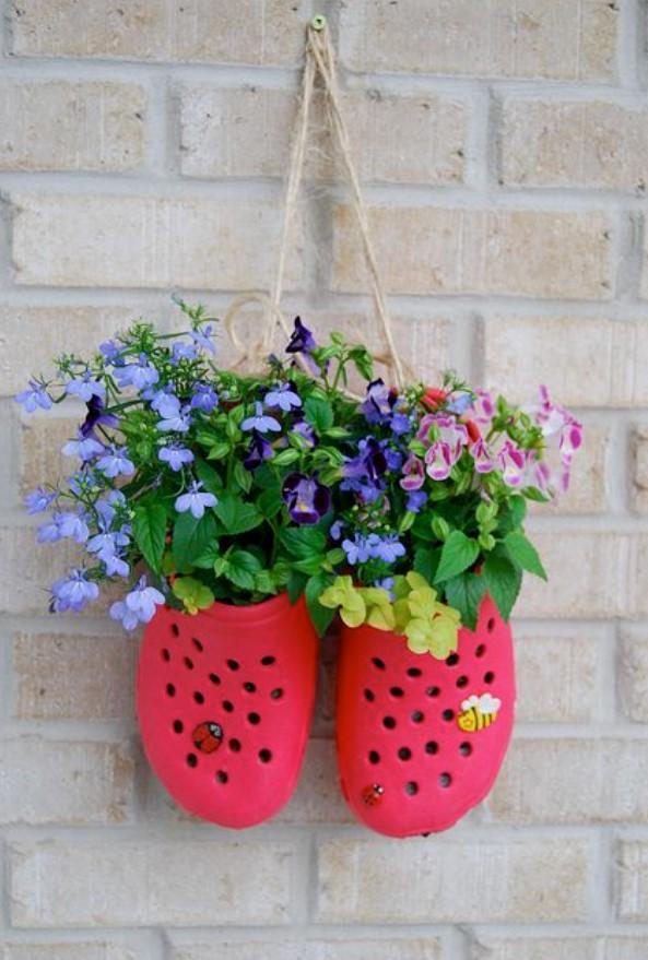φυτά παπούτσια