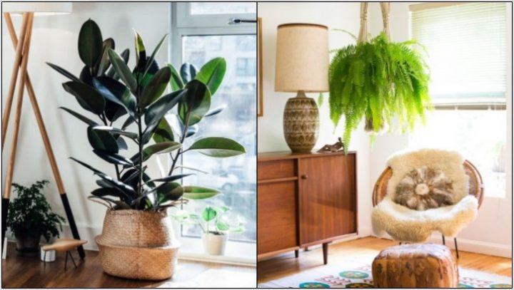 5 Ανθεκτικά φυτά για να διακοσμήσεις το σπίτι σου!