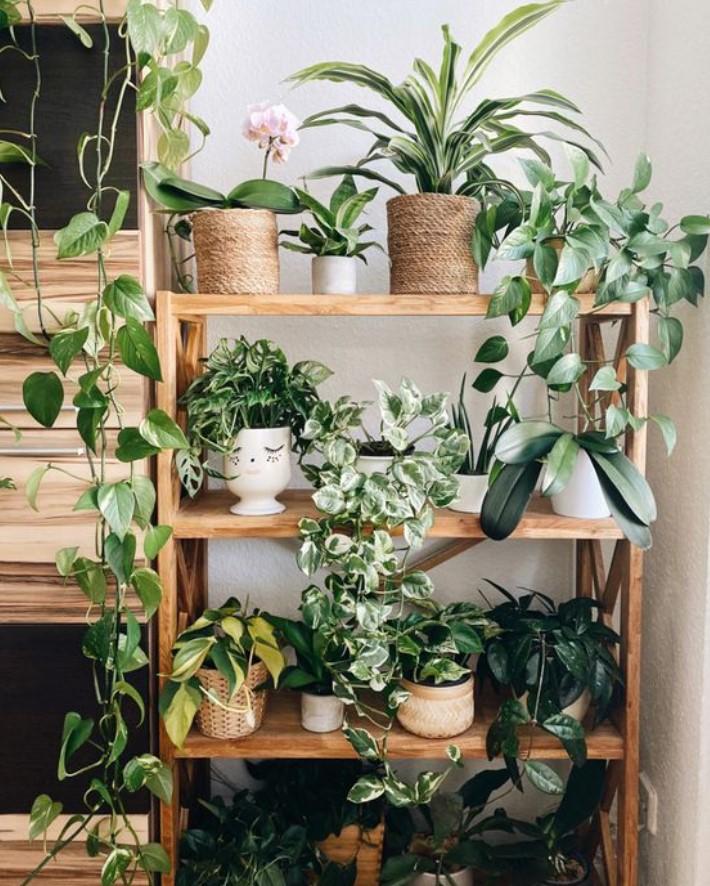 γλαστράκια με φυτά