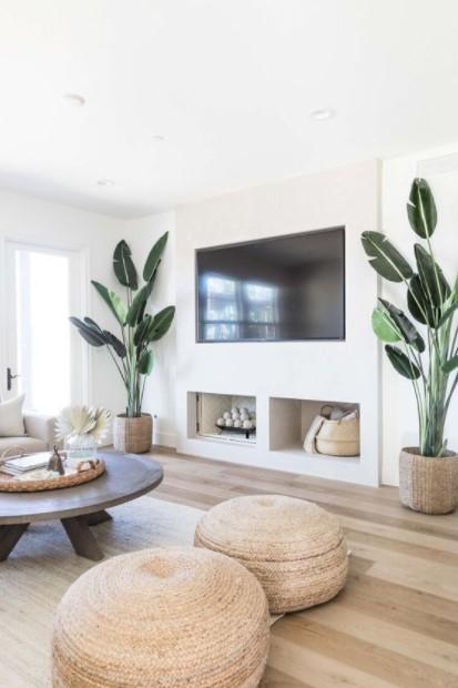 τηλεόραση μεγάλα φυτά